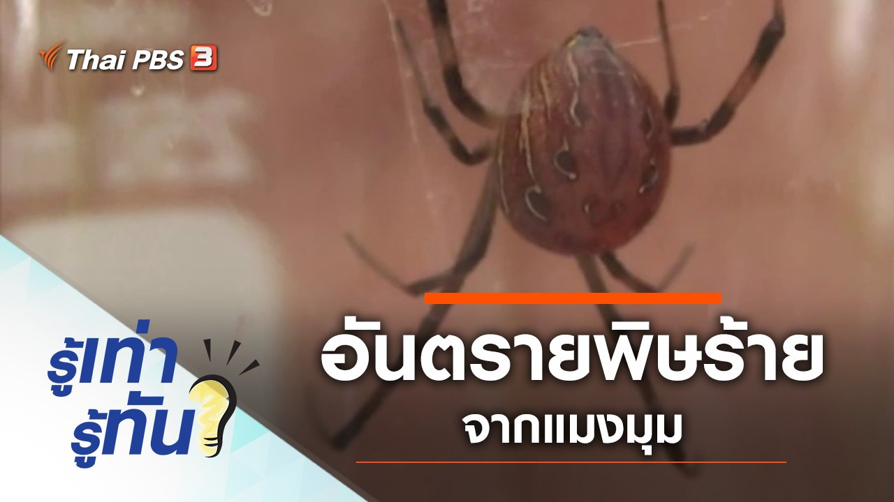 รู้เท่ารู้ทัน - อันตรายพิษร้ายจากแมงมุม