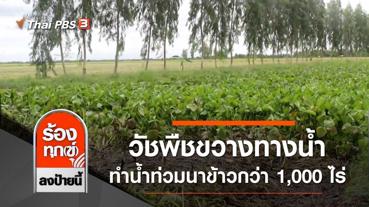 ร้องทุก(ข์) ลงป้ายนี้ - วัชพืชขวางทางน้ำ ทำน้ำท่วมนาข้าวกว่า 1,000 ไร่ จ.เพชรบุรี