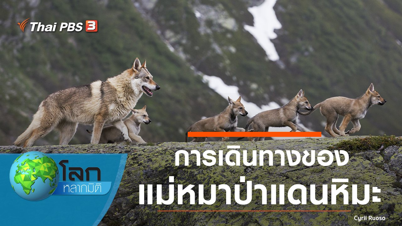โลกหลากมิติ - การเดินทางของแม่หมาป่าแดนหิมะ
