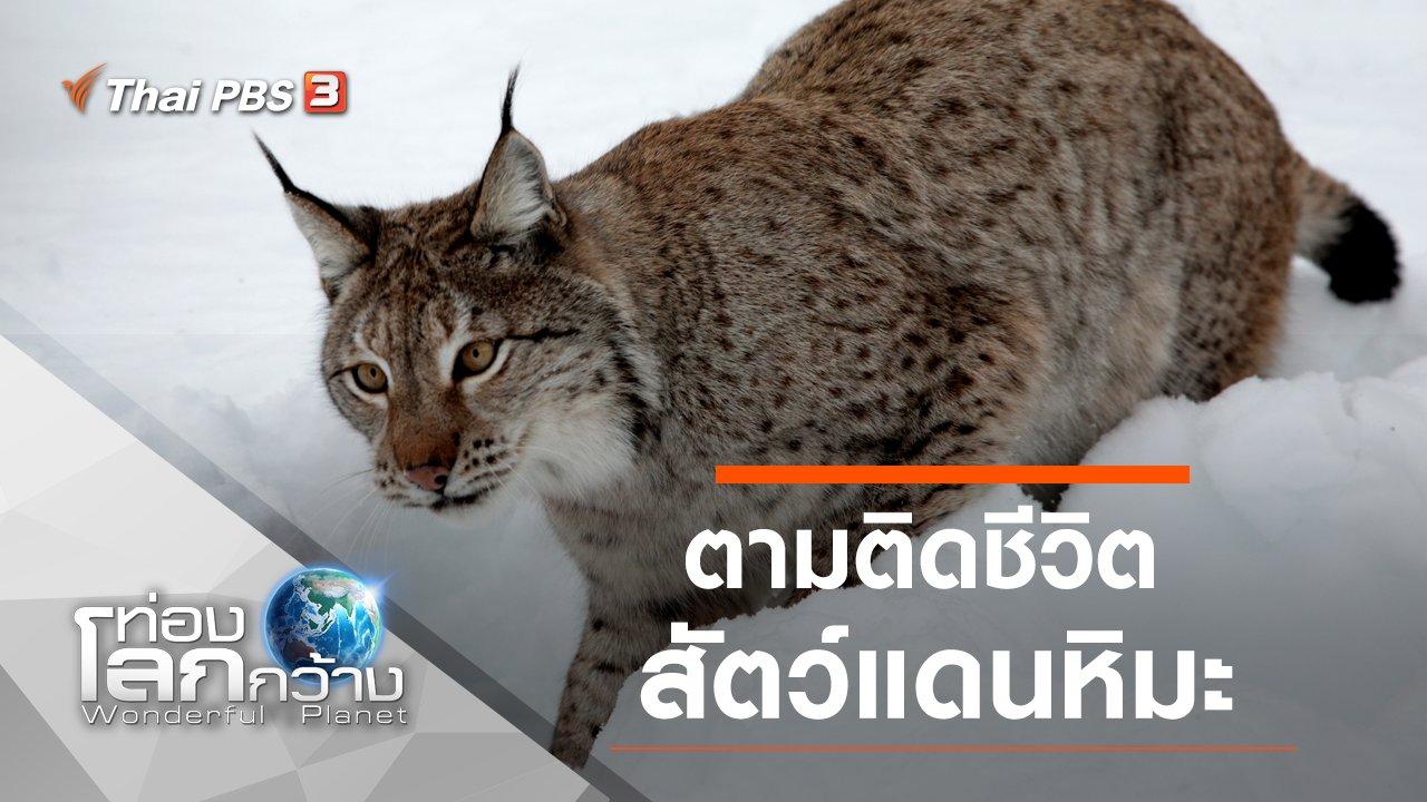 ท่องโลกกว้าง - ตามติดชีวิตสัตว์แดนหิมะ