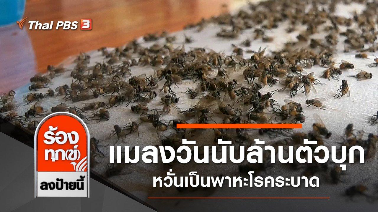 ร้องทุก(ข์) ลงป้ายนี้ - แมลงวันนับล้านตัวบุกชุมชน หวั่นเป็นพาหะโรคระบาด จ.สระบุรี