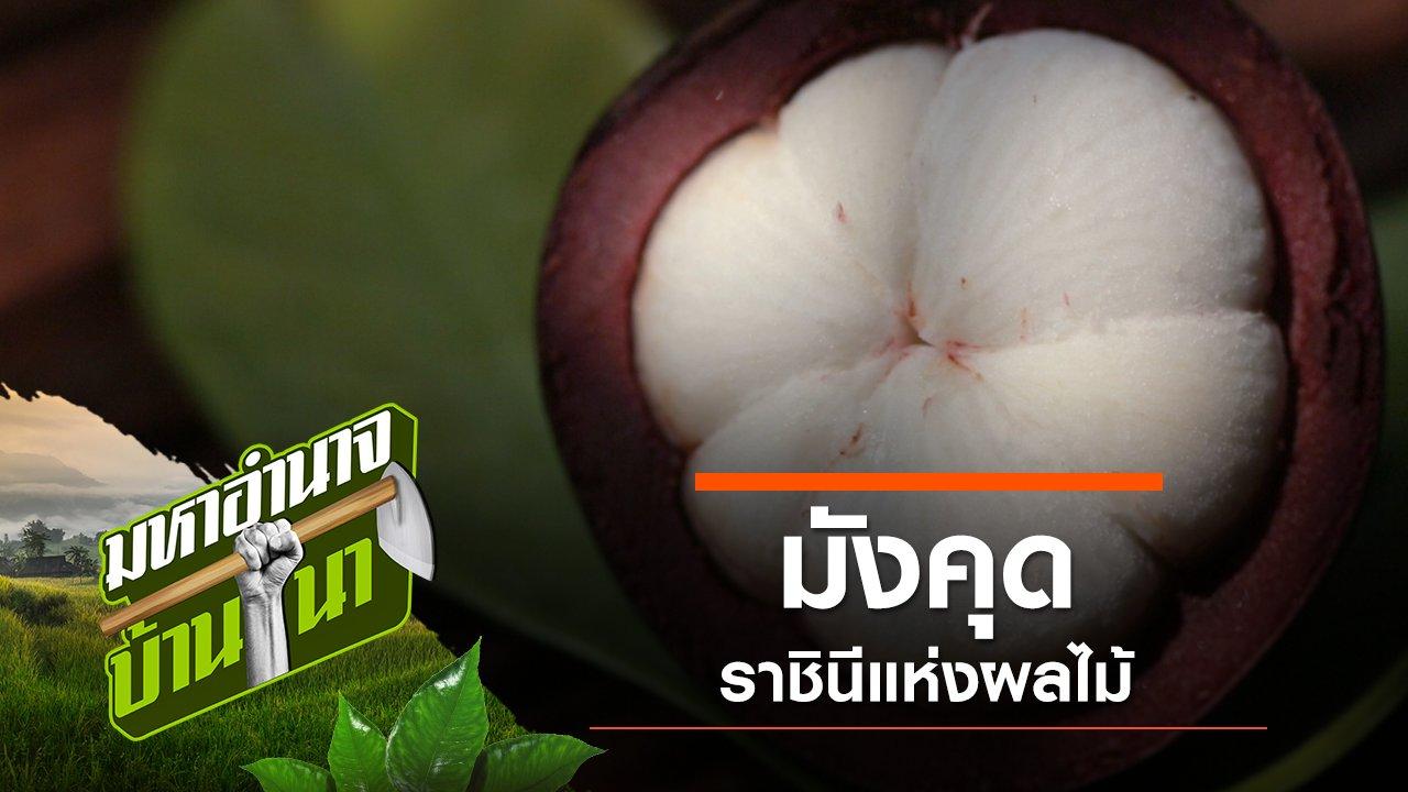 มหาอำนาจบ้านนา - มังคุด ราชินีแห่งผลไม้