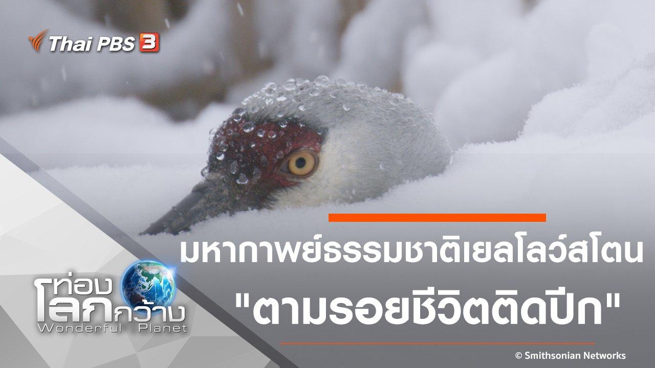 ท่องโลกกว้าง - มหากาพย์ธรรมชาติเยลโลว์สโตน ตอน ตามรอยชีวิตติดปีก