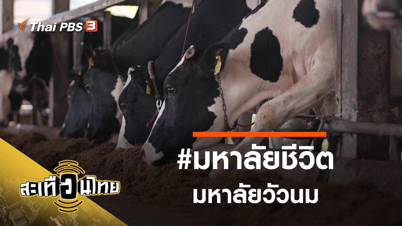 สะเทือนไทย - #มหาลัยชีวิตมหาลัยวัวนม