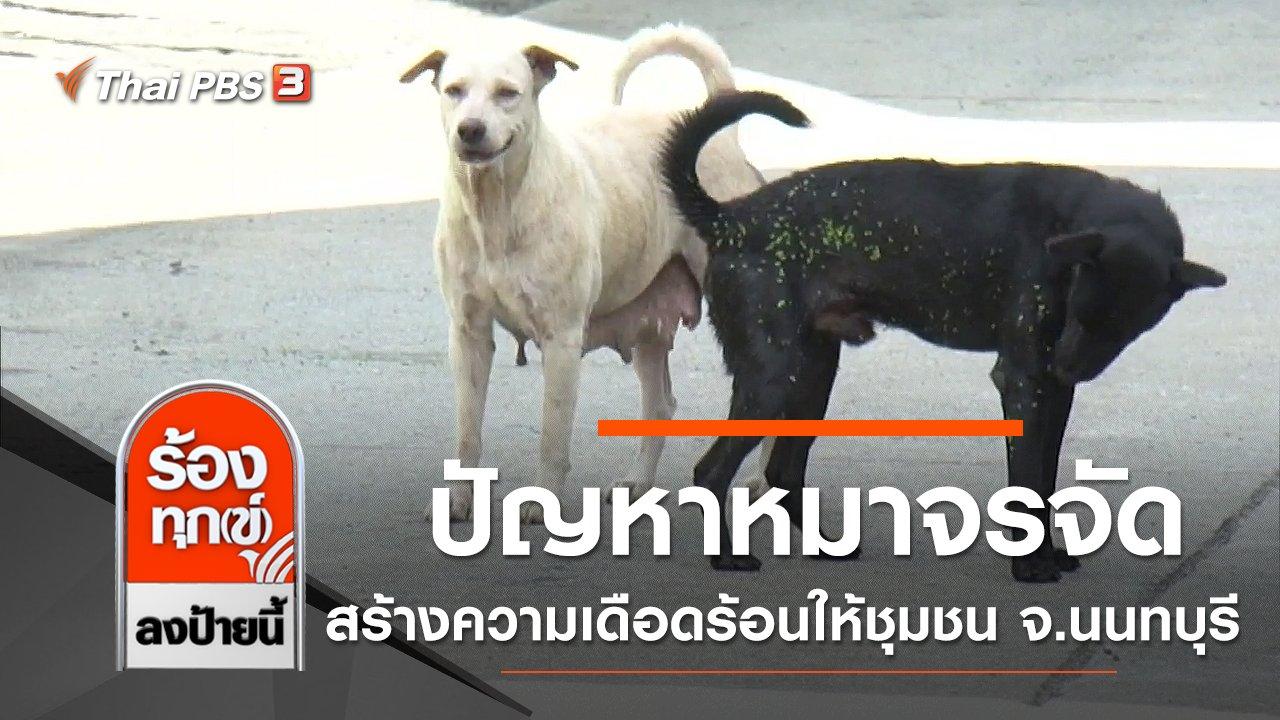 ร้องทุก(ข์) ลงป้ายนี้ - ปัญหาหมาจรจัดจำนวนมากสร้างความเดือดร้อนให้ชุมชน จ.นนทบุรี