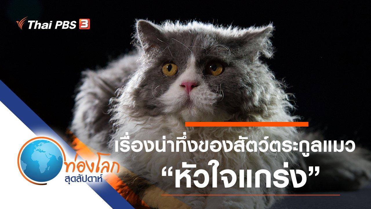 ท่องโลกสุดสัปดาห์ - เรื่องน่าทึ่งของสัตว์ตระกูลแมว ตอน หัวใจแกร่ง