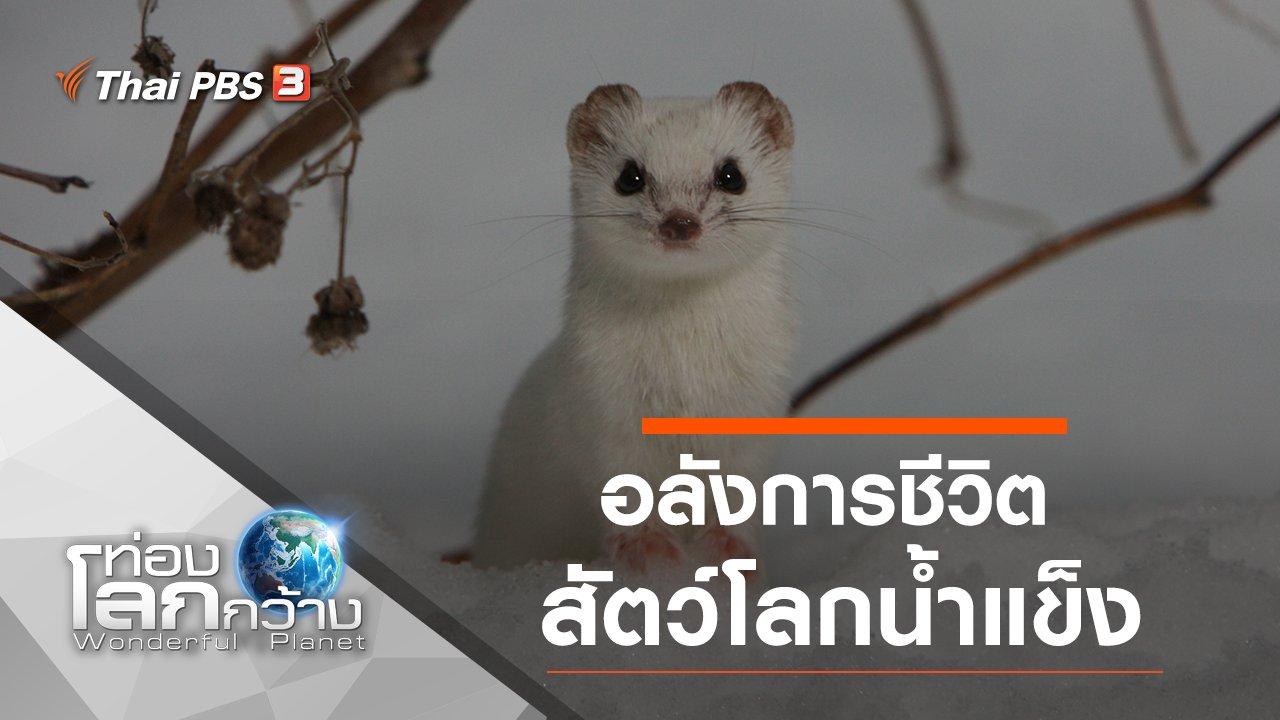 ท่องโลกกว้าง - อลังการชีวิตสัตว์โลกน้ำแข็ง