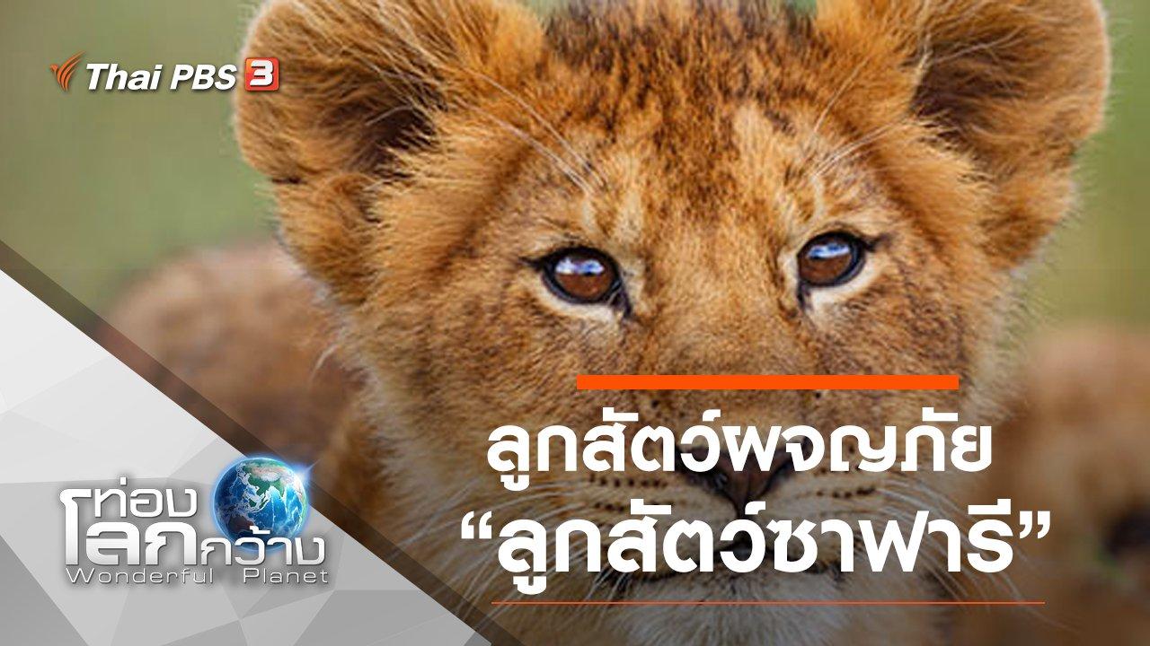 ท่องโลกกว้าง - ลูกสัตว์ผจญภัย ตอน ลูกสัตว์ซาฟารี