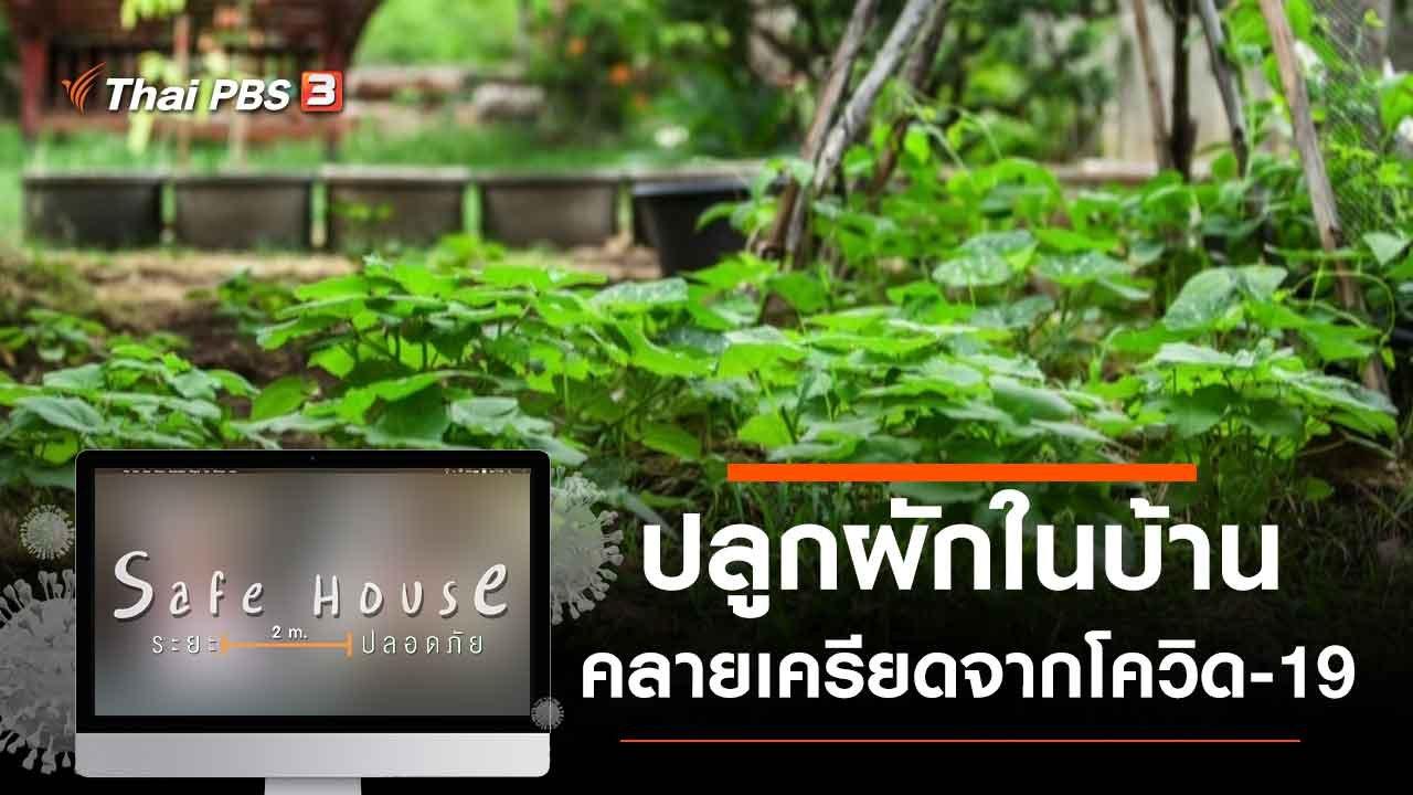 Safe House ปกติใหม่ - ปลูกผักในบ้านคลายเครียดจากโควิด-19