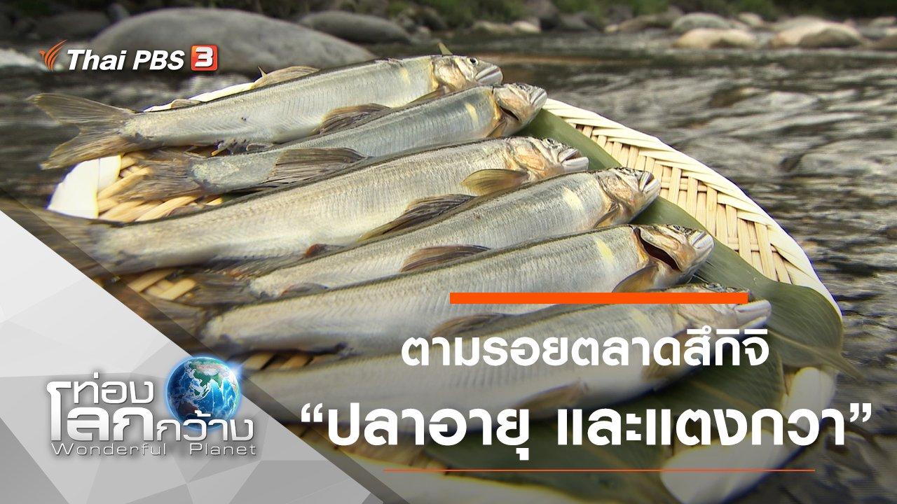 ท่องโลกกว้าง - ตามรอยตลาดสึกิจิ ตอน ปลาอายุ และแตงกวา