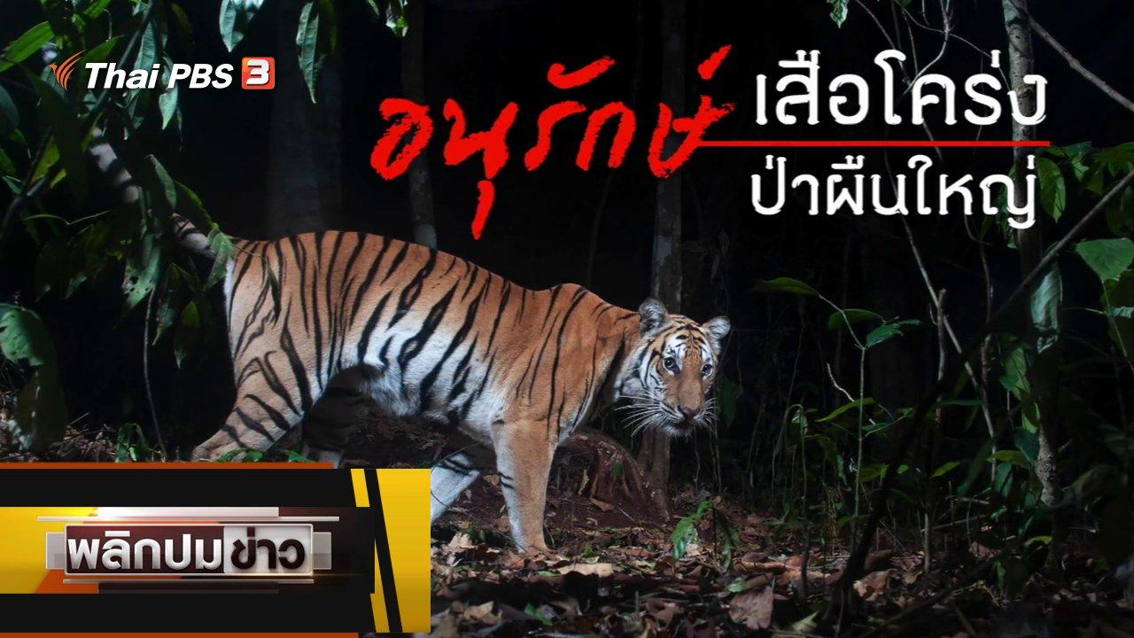 พลิกปมข่าว - อนุรักษ์เสือโคร่ง ป่าผืนใหญ่