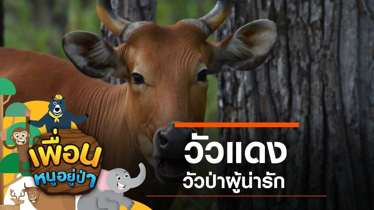เพื่อนหนูอยู่ป่า - วัวแดง วัวป่าผู้น่ารัก