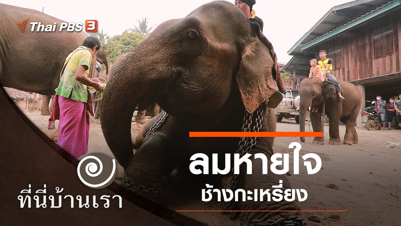 ที่นี่บ้านเรา - ลมหายใจ ช้างกะเหรี่ยง