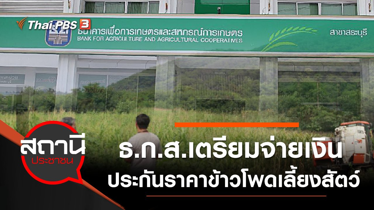 สถานีประชาชน - ธ.ก.ส.เตรียมจ่ายเงินประกันราคาข้าวโพดเลี้ยงสัตว์แก่เกษตรกร