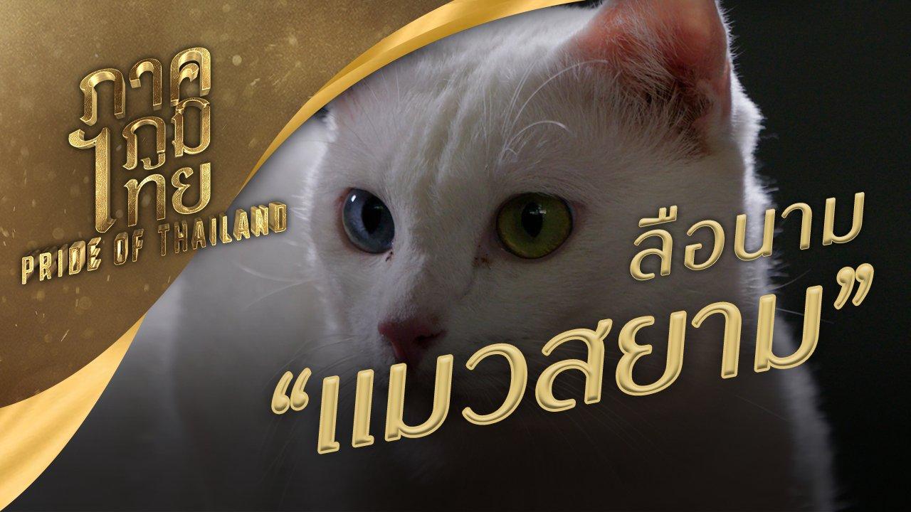 ภาคภูมิไทย - ลือนาม แมวสยาม
