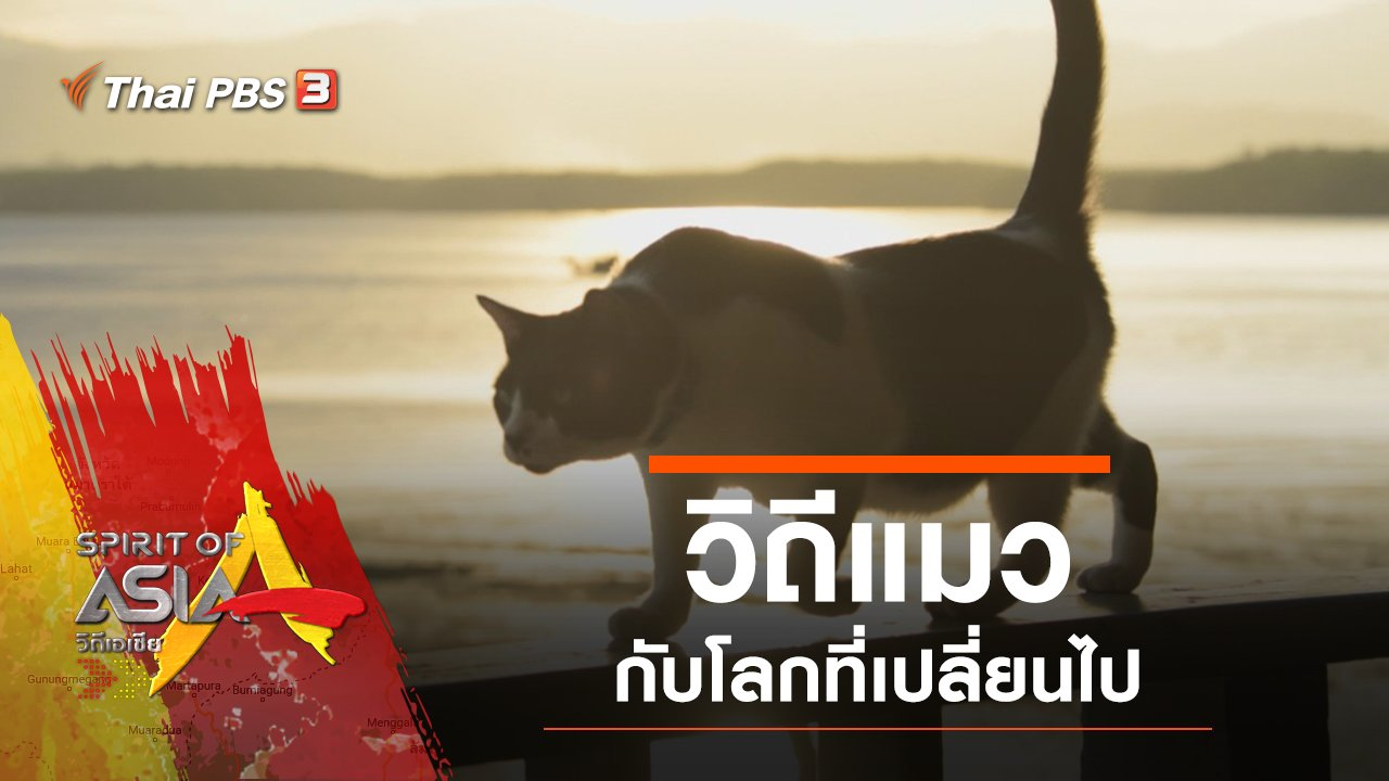 Spirit of Asia - วิถีแมวกับโลกที่เปลี่ยนไป