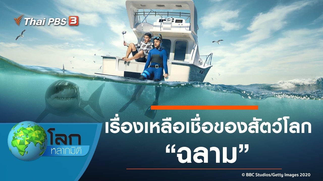 โลกหลากมิติ - เรื่องเหลือเชื่อของสัตว์โลก ตอน ฉลาม