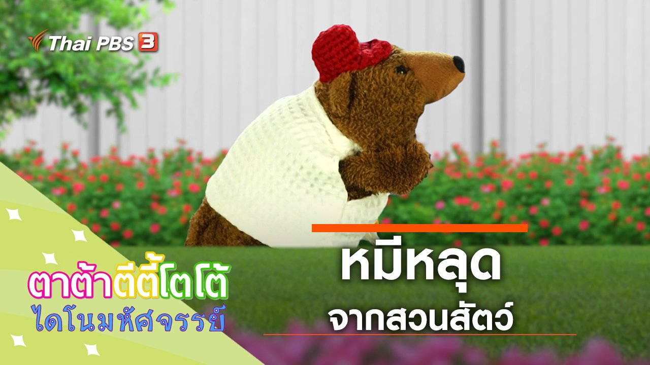 TataTitiToto ไดโนมหัศจรรย์ - หมีหลุดจากสวนสัตว์