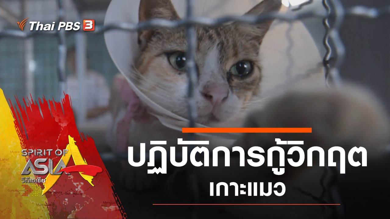 Spirit of Asia - ปฏิบัติการกู้วิกฤตเกาะแมว