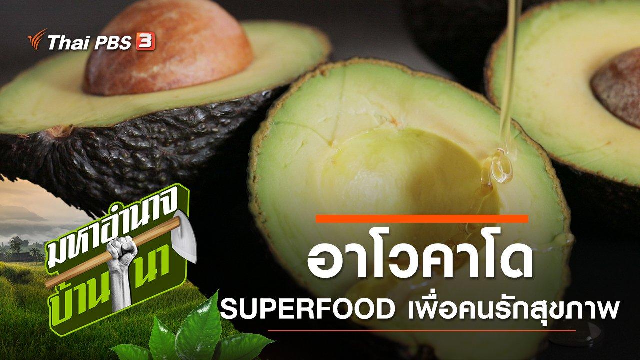 มหาอำนาจบ้านนา - อาโวคาโด SUPERFOOD เพื่อคนรักสุขภาพ