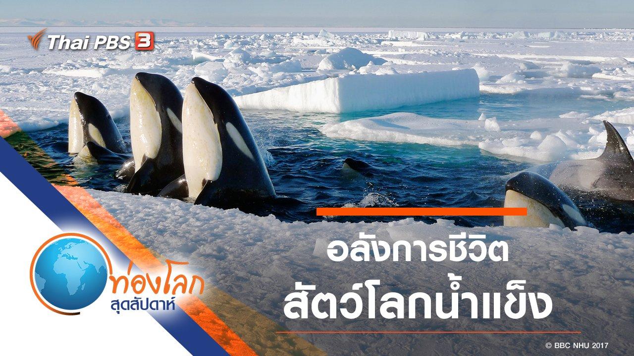 ท่องโลกสุดสัปดาห์ - อลังการชีวิตสัตว์โลกน้ำแข็ง