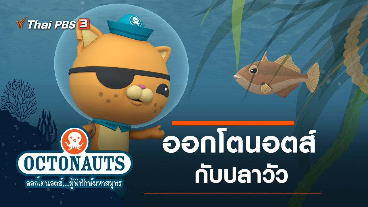 ออกโตนอตส์...ผู้พิทักษ์มหาสมุทร - ออกโตนอตส์กับปลาวัว