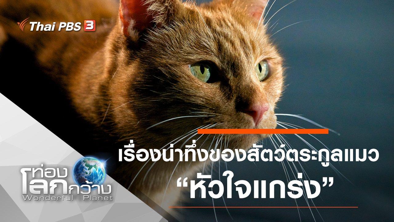 ท่องโลกกว้าง - เรื่องน่าทึ่งของสัตว์ตระกูลแมว ตอน หัวใจแกร่ง