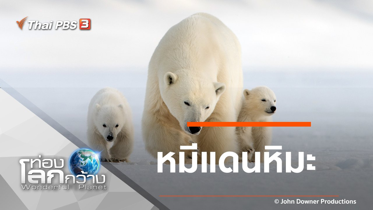ท่องโลกกว้าง - หมีแดนหิมะ