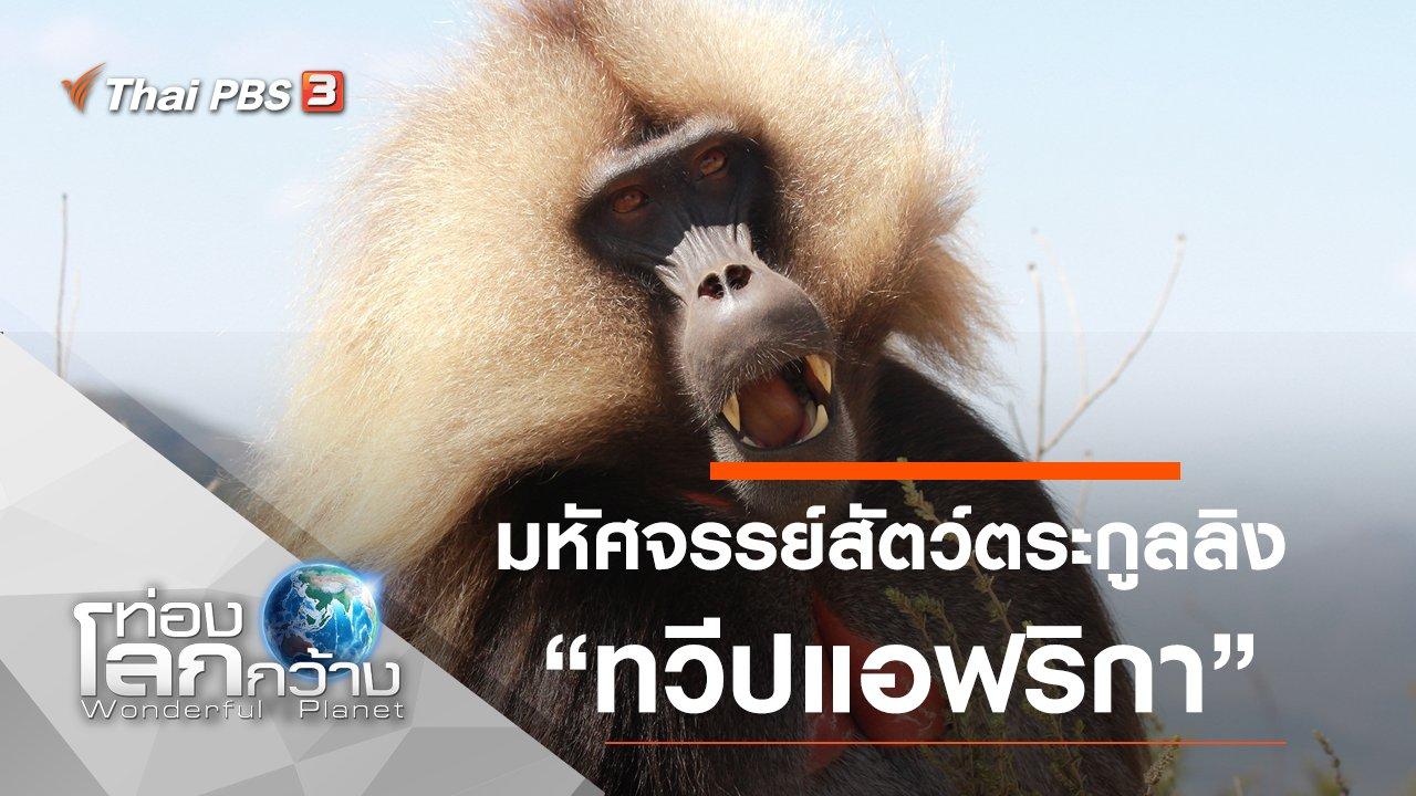 ท่องโลกกว้าง - มหัศจรรย์สัตว์ตระกูลลิง ตอน ทวีปแอฟริกา