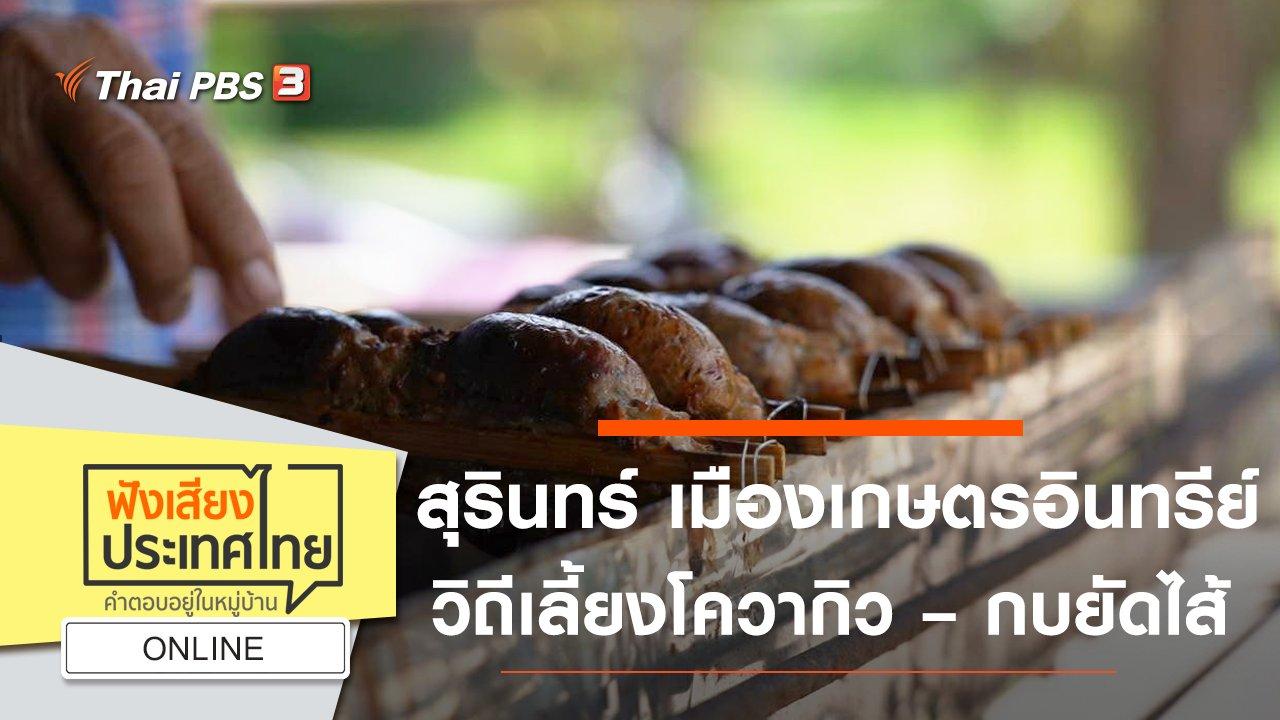 ฟังเสียงประเทศไทย - Online : สุรินทร์ เมืองเกษตรอินทรีย์ วิถีเลี้ยงโควากิว – กบยัดไส้