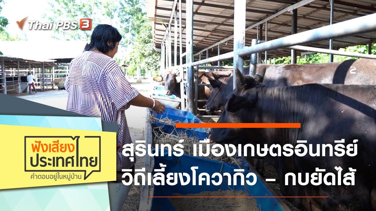 ฟังเสียงประเทศไทย - สุรินทร์ เมืองเกษตรอินทรีย์ วิถีเลี้ยงโควากิว – กบยัดไส้