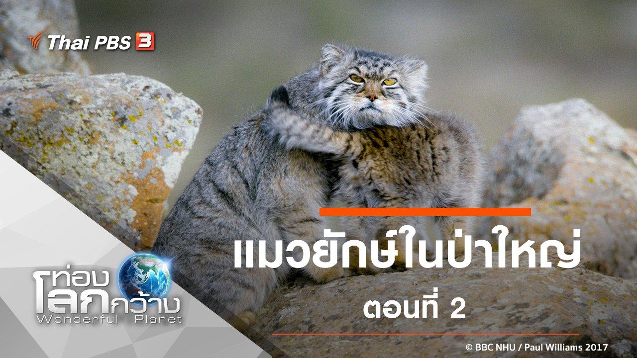 ท่องโลกกว้าง - แมวยักษ์ในป่าใหญ่ ตอนที่ 2