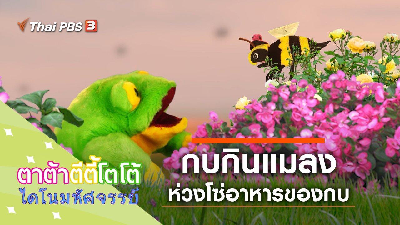 TataTitiToto ไดโนมหัศจรรย์ - กบกินแมลง