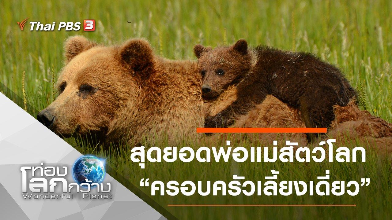 ท่องโลกกว้าง - สุดยอดพ่อแม่สัตว์โลก ตอน ครอบครัวเลี้ยงเดี่ยว