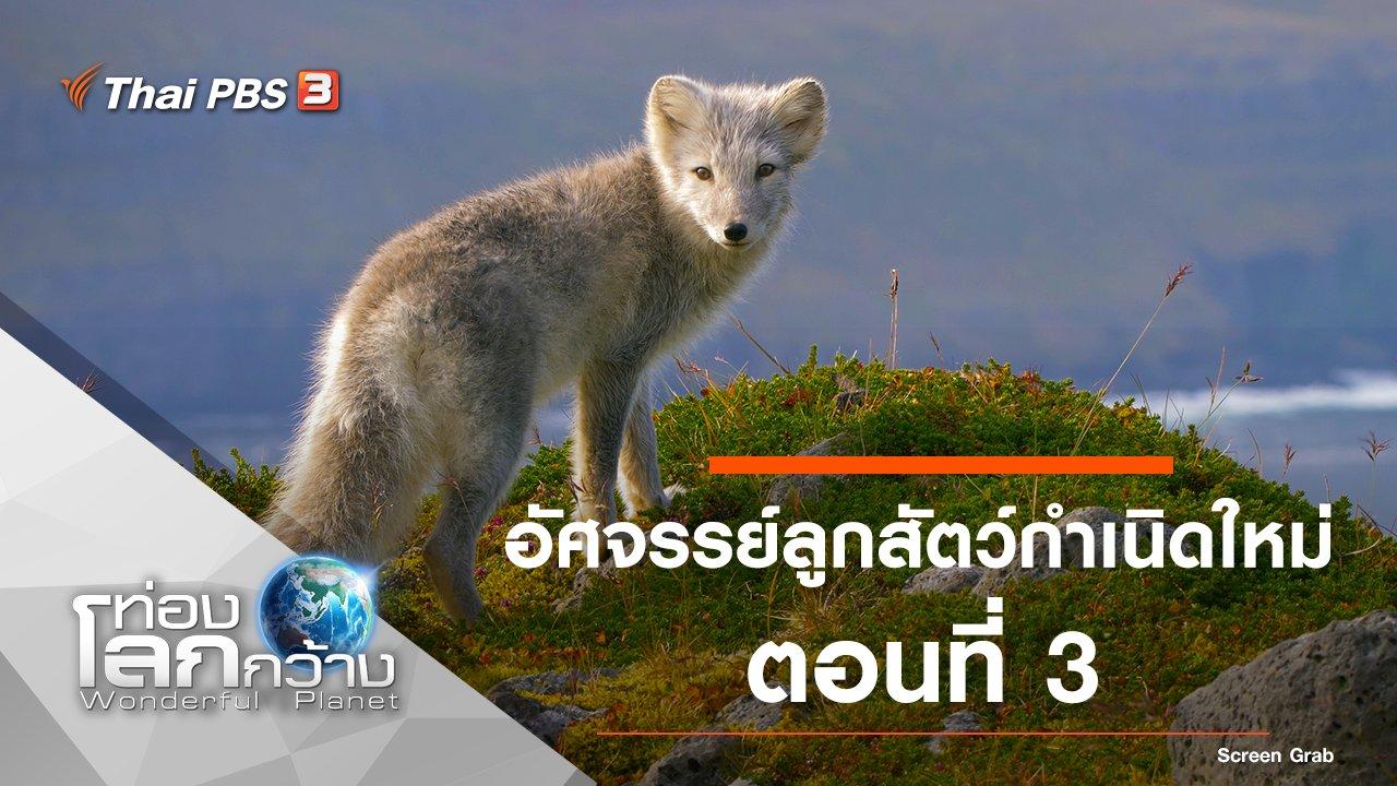 ท่องโลกกว้าง - อัศจรรย์ลูกสัตว์กำเนิดใหม่ ตอนที่ 3