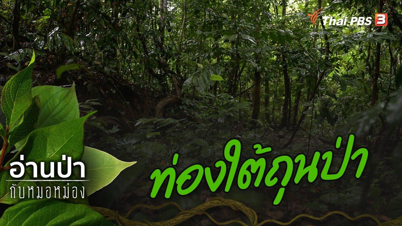 อ่านป่ากับหมอหม่อง - ท่องใต้ถุนป่า