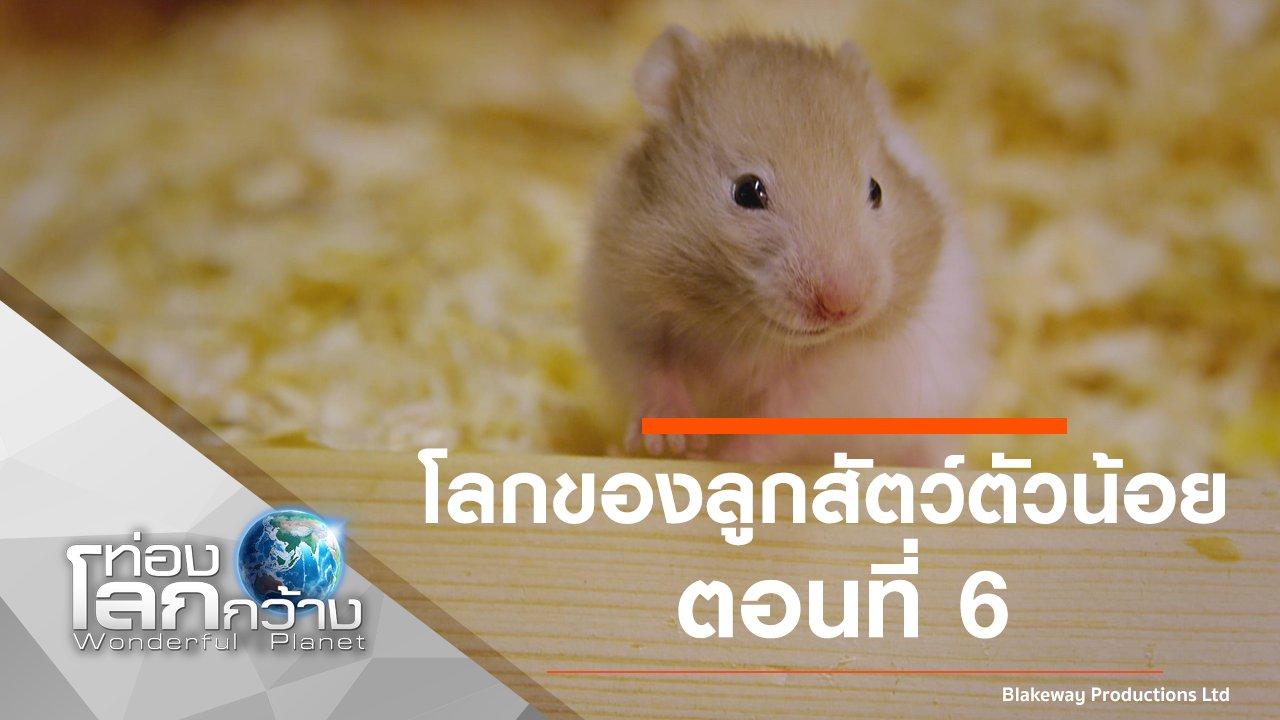 ท่องโลกกว้าง - โลกของลูกสัตว์ตัวน้อย ตอนที่ 6