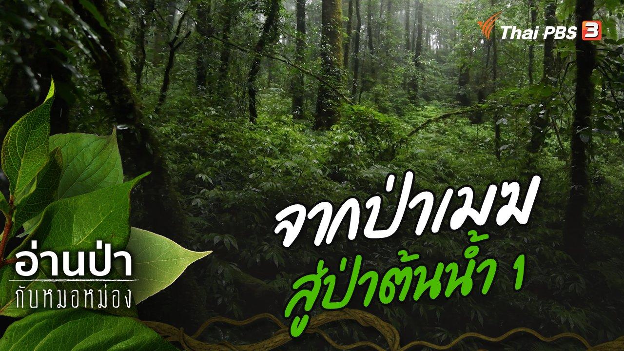 อ่านป่ากับหมอหม่อง - จากป่าเมฆสู่ป่าต้นน้ำ 1
