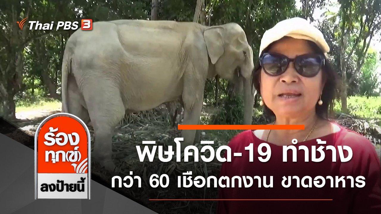 ร้องทุก(ข์) ลงป้ายนี้ - พิษโควิด-19 ทำช้างกว่า 60 เชือกตกงาน ขาดอาหาร จ.ตรัง