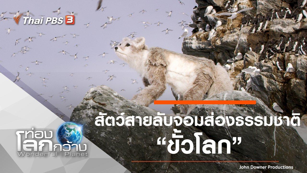 ท่องโลกกว้าง - สัตว์สายลับจอมส่องธรรมชาติ ตอน ขั้วโลก