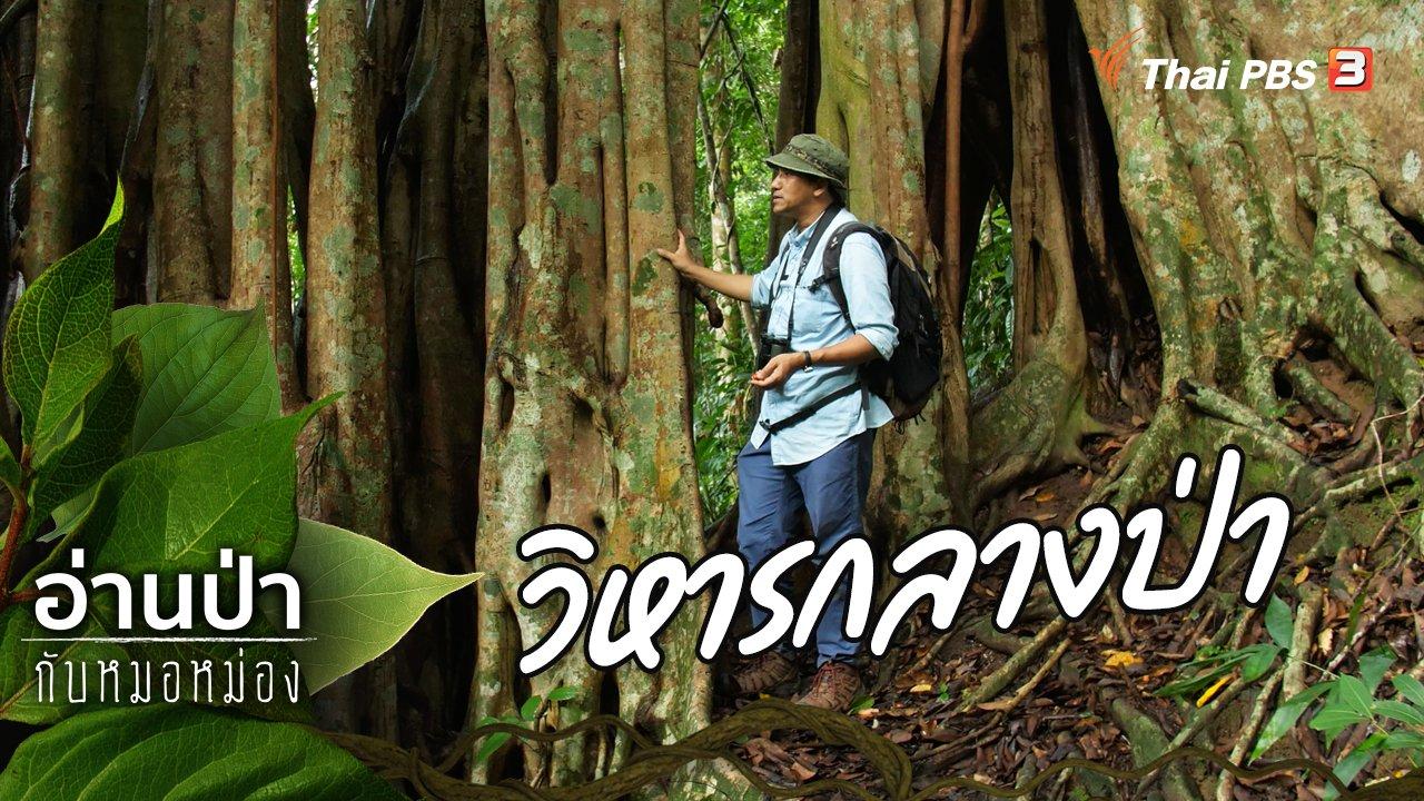อ่านป่ากับหมอหม่อง - วิหารกลางป่า