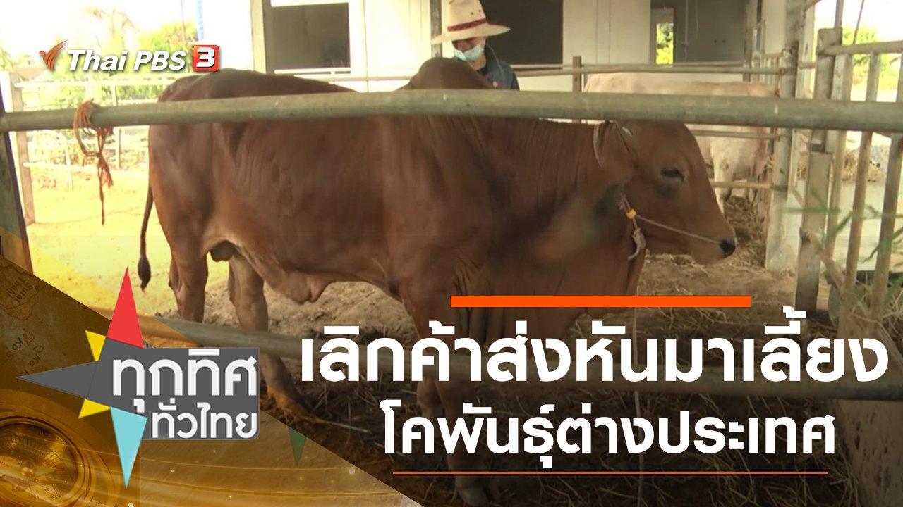 ทุกทิศทั่วไทย - เลิกค้าส่งหันมาเลี้ยงโคพันธุ์ต่างประเทศ จ.กาฬสินธุ์