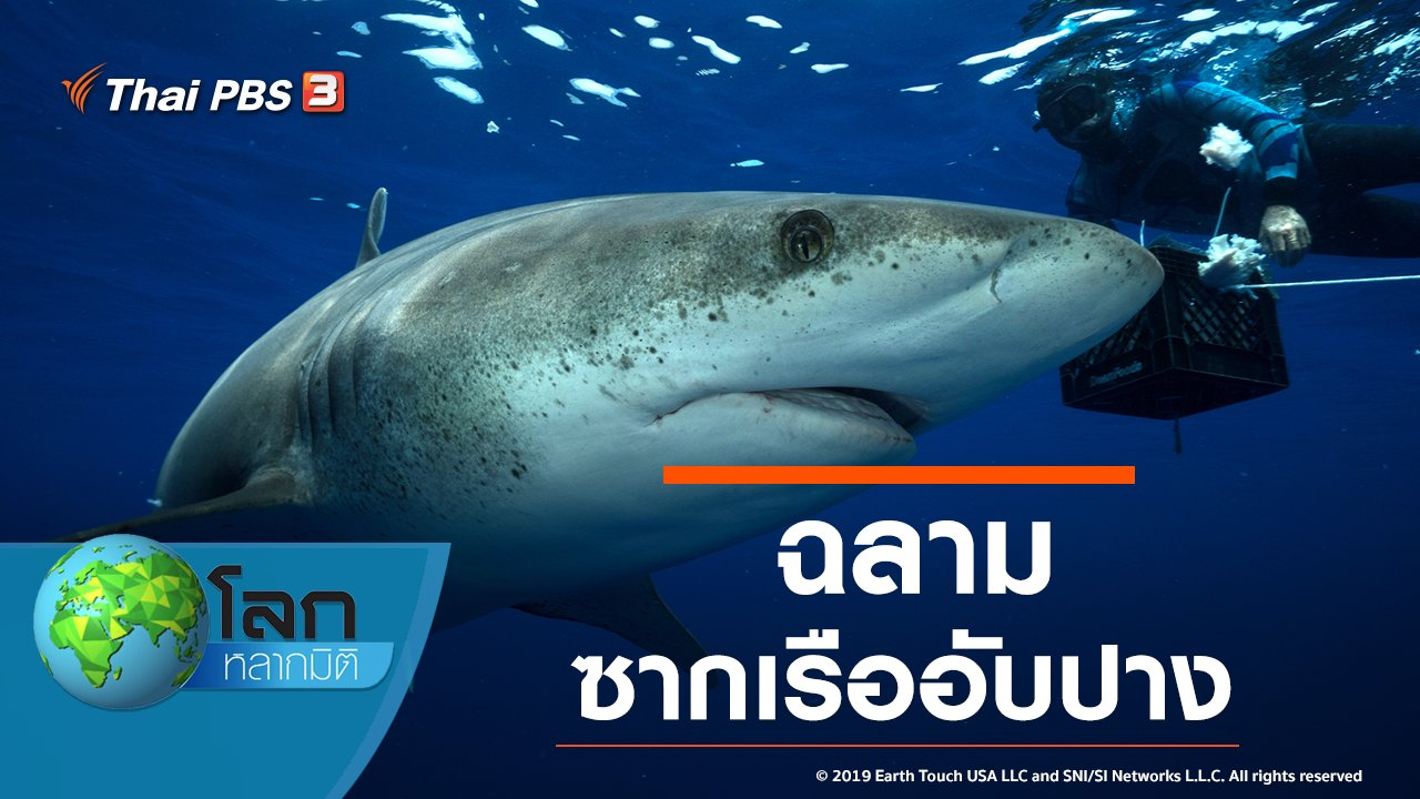 โลกหลากมิติ - ฉลามซากเรืออับปาง