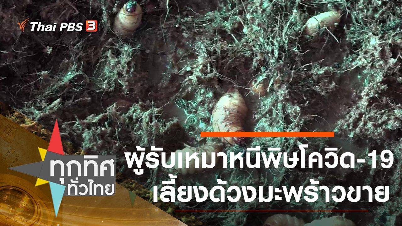 ทุกทิศทั่วไทย - ผู้รับเหมาหนีพิษโควิด-19 เลี้ยงด้วงมะพร้าวขาย