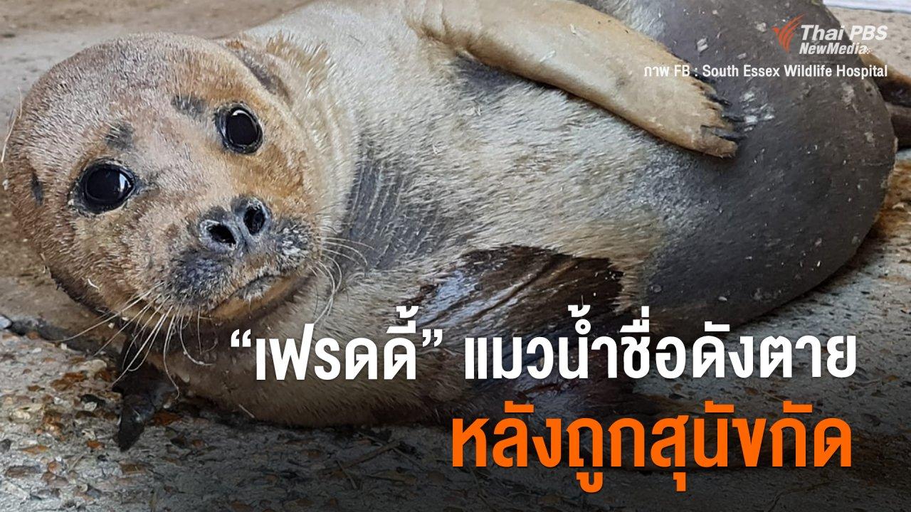 "Around the World - ""เฟรดดี้"" แมวน้ำชื่อดัง ตายหลังถูกสุนัขที่กัด"