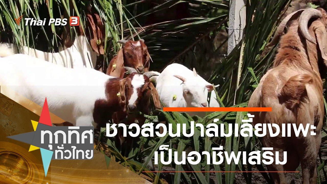 ทุกทิศทั่วไทย - ชาวสวนปาล์มเลี้ยงแพะเป็นอาชีพเสริม