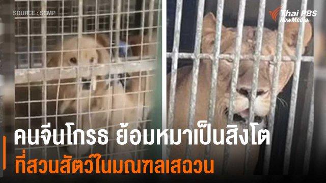 คนจีนโกรธ ย้อมหมาเป็นสิงโต ที่สวนสัตว์ในมณฑลเสฉวน ประเทศจีน