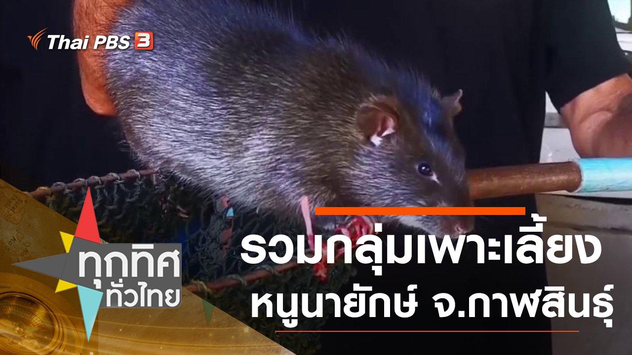 ทุกทิศทั่วไทย - รวมกลุ่มเพาะเลี้ยงหนูนายักษ์ จ.กาฬสินธุ์