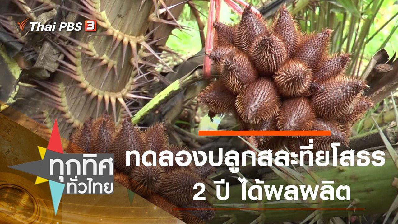 ทุกทิศทั่วไทย - ทดลองปลูกสละ 2 ปี ได้ผลผลิต จ.ยโสธร