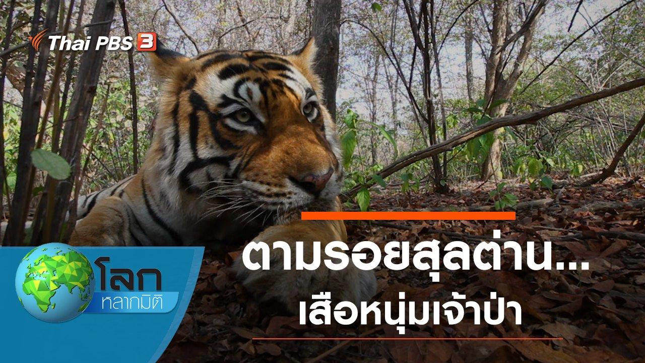 โลกหลากมิติ - ตามรอยสุลต่าน...เสือหนุ่มเจ้าป่า